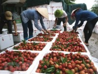 vietnam targets us 10 billion from fruit vegetable exports