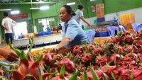 knocking down eu vietnam fruit and veggie trade barriers