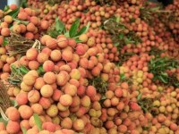 china buys over 9500 tons of lychees