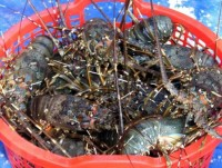 measures sought to facilitate vietnams shrimp export to us