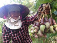 cashew industry suffers from weakness