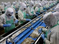 seafood processing firms lack materials