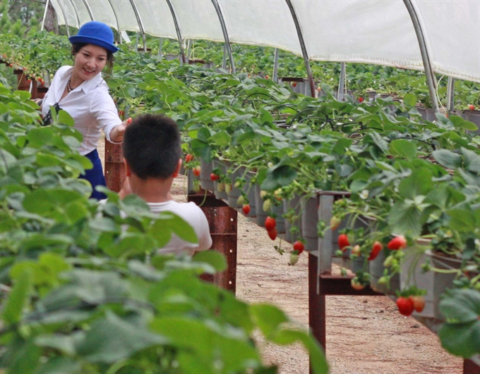 japan eyes tpp investment in vietnam agriculture