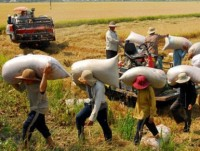 vietnam to promote high quality rice to boost export revenues