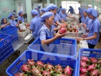vietnam sees feasible us 3 billion export of fruits vegetables