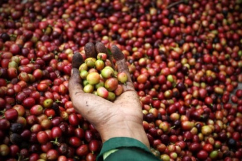 coffee exports estimated at us 3 billion