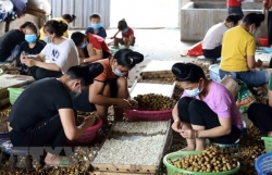 """Policy dialogue promotes ASEAN women""""s role in agriculture"""