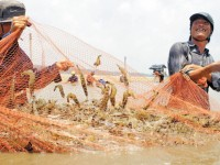 insurance for shrimps and fish farmers put insurance companies into a dilemma