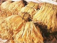 more than 37 tonnes of suspected smuggled tobacco discovered in lao cai