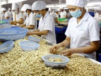 cashew exports in eight months fetch us 22 billion