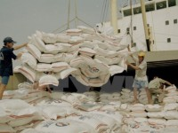 rice export goal raised to 56 million tonnes this year
