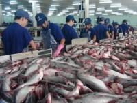 vn firms seek markets for tra fish