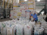 philippines to import 293100 tons of vietnam rice