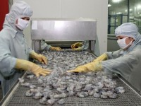 safe shrimp production chain for export to be supervised