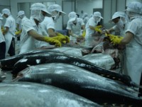 tuna exports to emerging markets on the rise