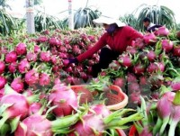 vietnam seeks ways to boost fruit veggie exports to eu