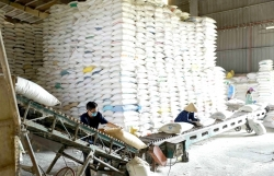 Việt Nam likely to achieve rice export target this year