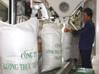 chinese importers survey an giangs rice market