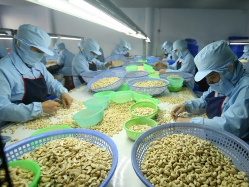 cashew nut exports expected to exceed us 3 billion
