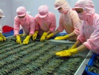 china to become second largest importer of vietnam shrimp