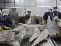 avoid defrauding in seafood exports