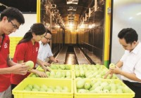 the yield of exporting vegetable is greater in 2017