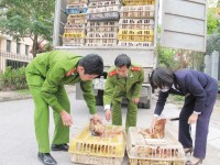 lang son strict control of illegal transport of poultry and poultry products