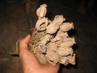 seize 13kg of dried opium from laos to vietnam