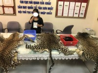 temporarily arrest a person transported wild animal products