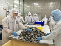 enterprises have signed many contracts hence the shrimp prices are rising