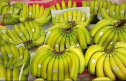Many advantages but Vietnamese bananas still only account for 1.9% of market share in South Korea