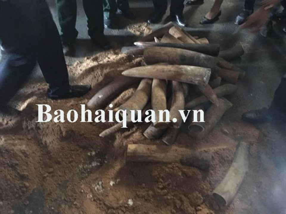 seize lots of ivory from 2 transit container of asphalt