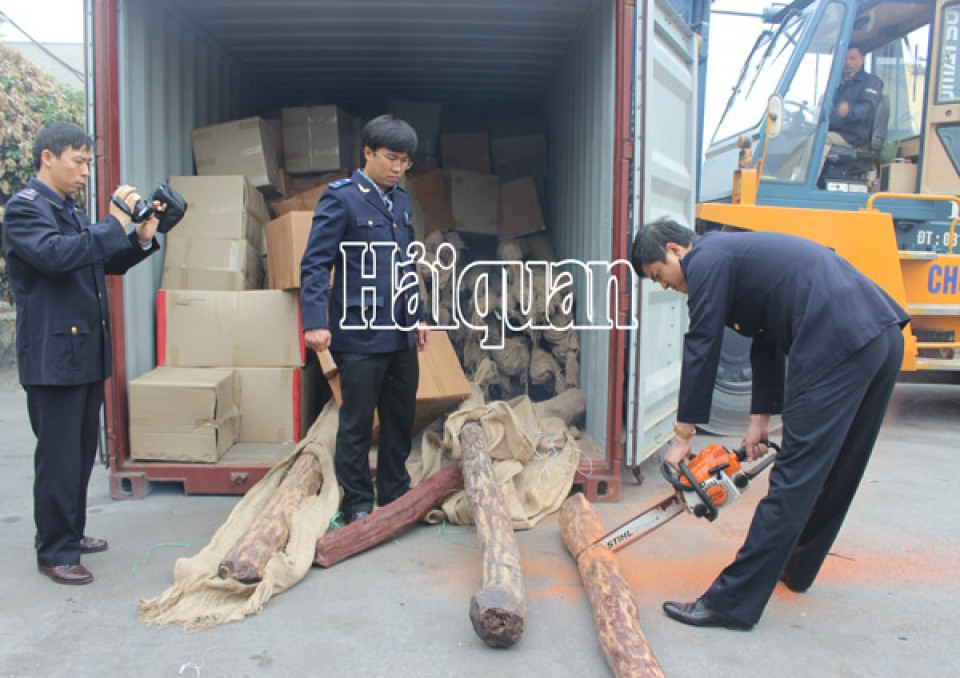 discover 2 container of padouk wood under the cloak of honduran mahogany wood