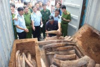 prosecute the smuggling case of more than 2 tons of ivory through cat lai