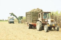 sugar cane industry should change urgently